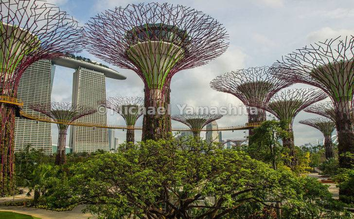 Vertical Plant Displays Park Just Opened Days Ago Singapore