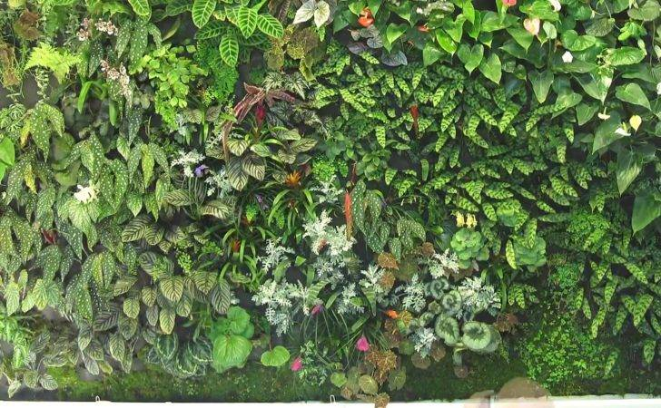 Vertical Plant Wall Blanc Style Youtube Indoor Green Plants