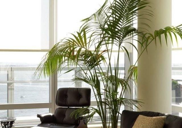 Vorteile Von Zimmerpflanzen Warum Sie Wichtig Unser Heim