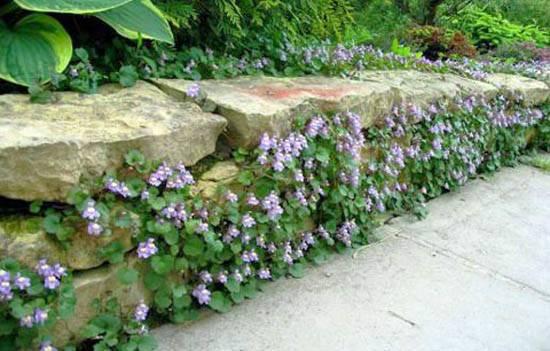 Wall Climbing Plant Flowers Charming Green Fence Design