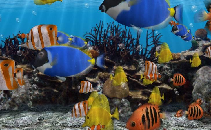 Water Heating Tank Aquarium Fish Exotic