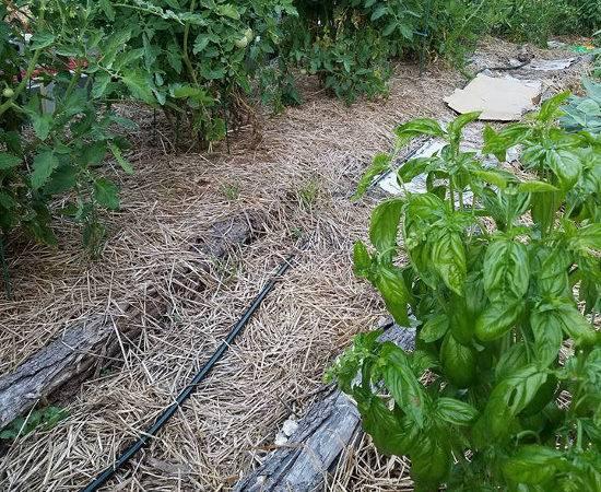 Weed Barrier Alternatives Plastic Landscape Fabric Frugal