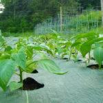 Weed Barrier Fabric Features Garden Mats