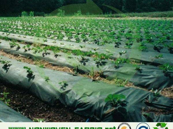Weed Control Fabric Agriculture Non Woven