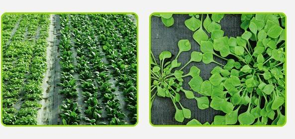 Weed Control Fabric Membrane Driveway Patio Decking Ground Cover Sheet