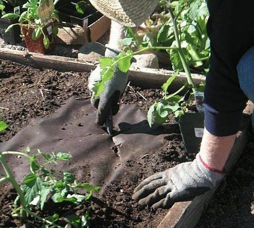 Weed Control Weedguardplus Biodegradable Supressing Mulch