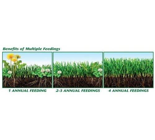 Weed Feed Lawn Fertilizer Plus Dandelion Killer