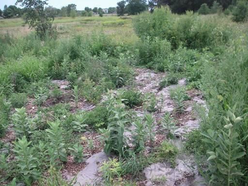 Weedguardplus Landscaping Flower Beds