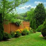 While Can Tall Shrubs Replacement Privacy