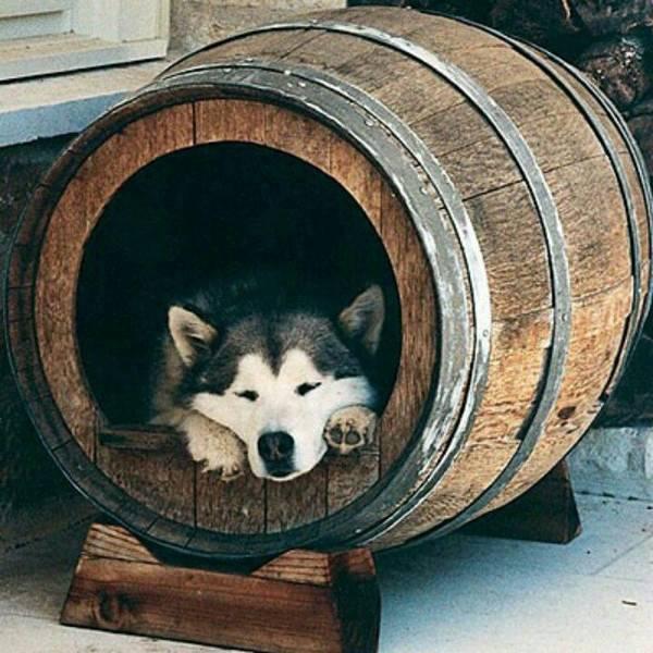 Wine Barrel Dog House Ideas