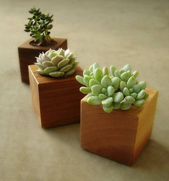 Wood Succulent Planters Modern Plant Cubes Gardener Gift