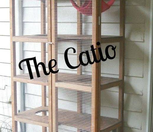 Woodworking Patio Cat Catio Project Diy Homesteading Outdoor Living