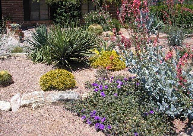 Xeriscape Designs Related Keywords Suggestions