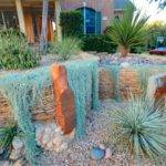 Xeriscape Project Contemporary Landscape Austin