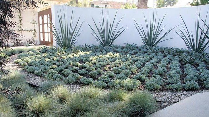 Xeriscaping Willey Furniture Store