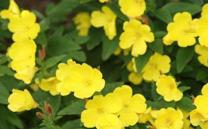 Yellow Sunshine Nature Home Pinterest
