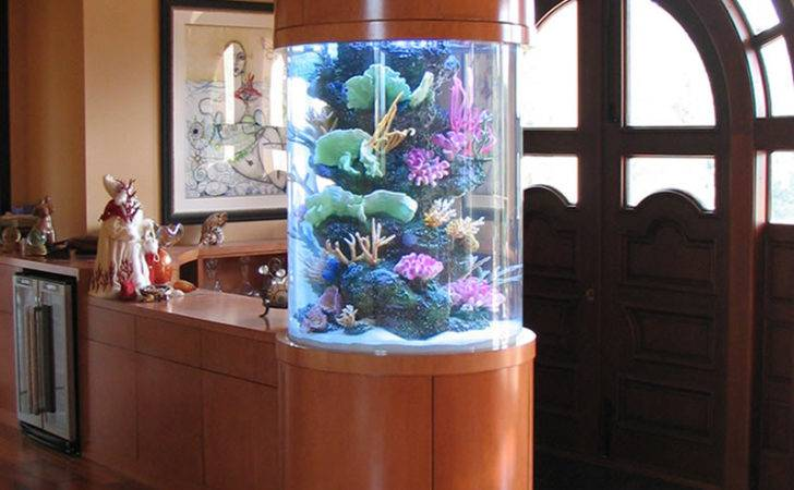 Your Custom Designed Tropical Fish Tank Impress Delight
